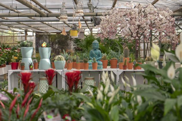 kamerplanten en woonaccessoires bij Jonkheer Plantencentrum Hillegom
