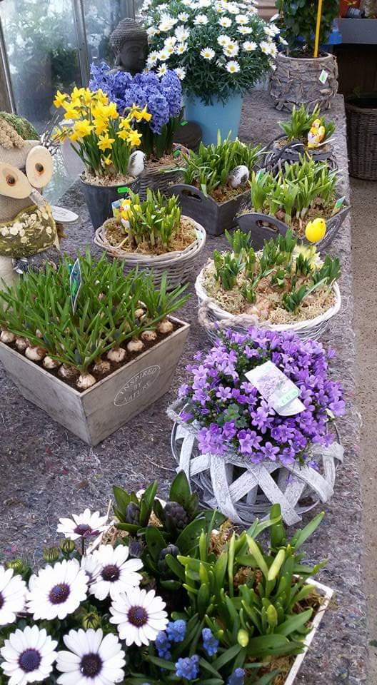 opgemaakte bloembakken bij Jonkheer Plantencentrum Hillegom