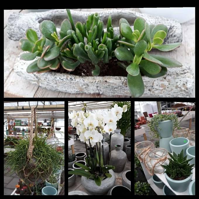 impressie kamerplanten en potten bij Jonkheer Plantencentrum Hillegom