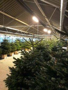 kerstboom kopen bij Jonkheer Plantencentrum Hillegom