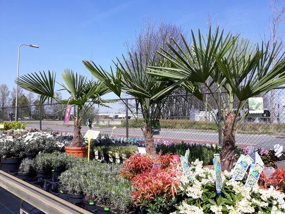 impressie tuinplanten bij Jonkheer Plantencentrum Hillegom