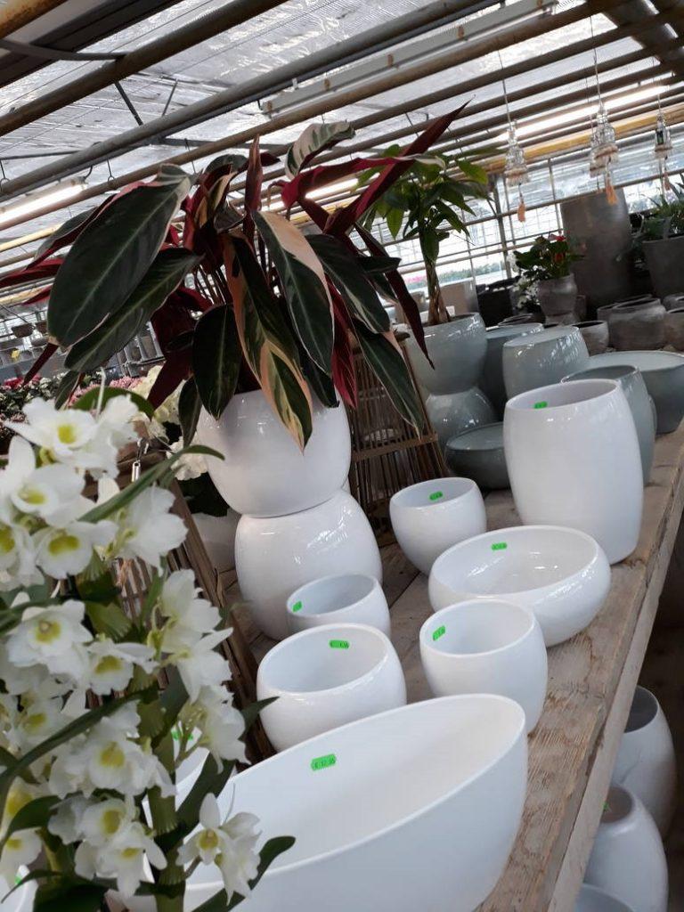 bloempotten strak modern bij Jonkheer Plantencentrum Hillegom