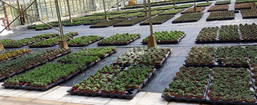 zomerplanten bij Jonkheer Plantencentrum Hillegom